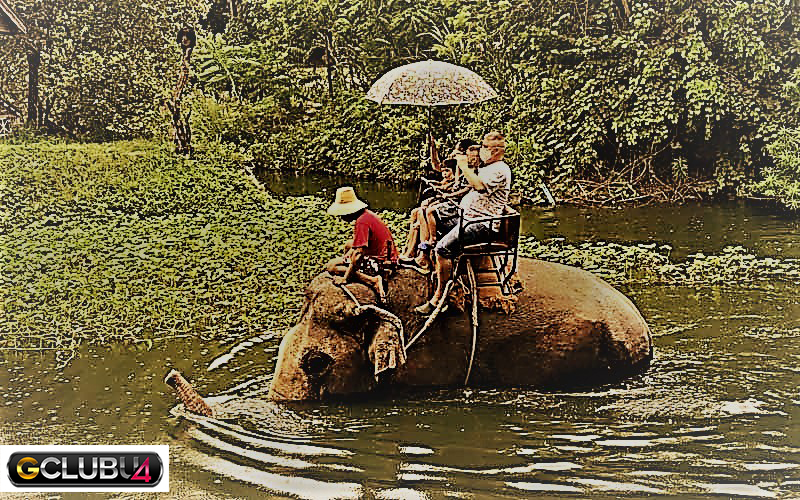 มองทางช้าง